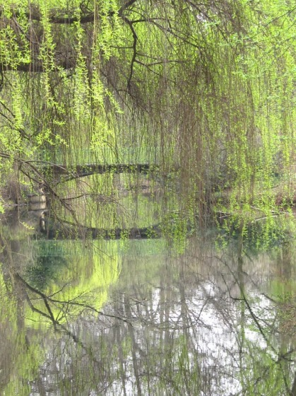 weeping-willow-531406_960_720